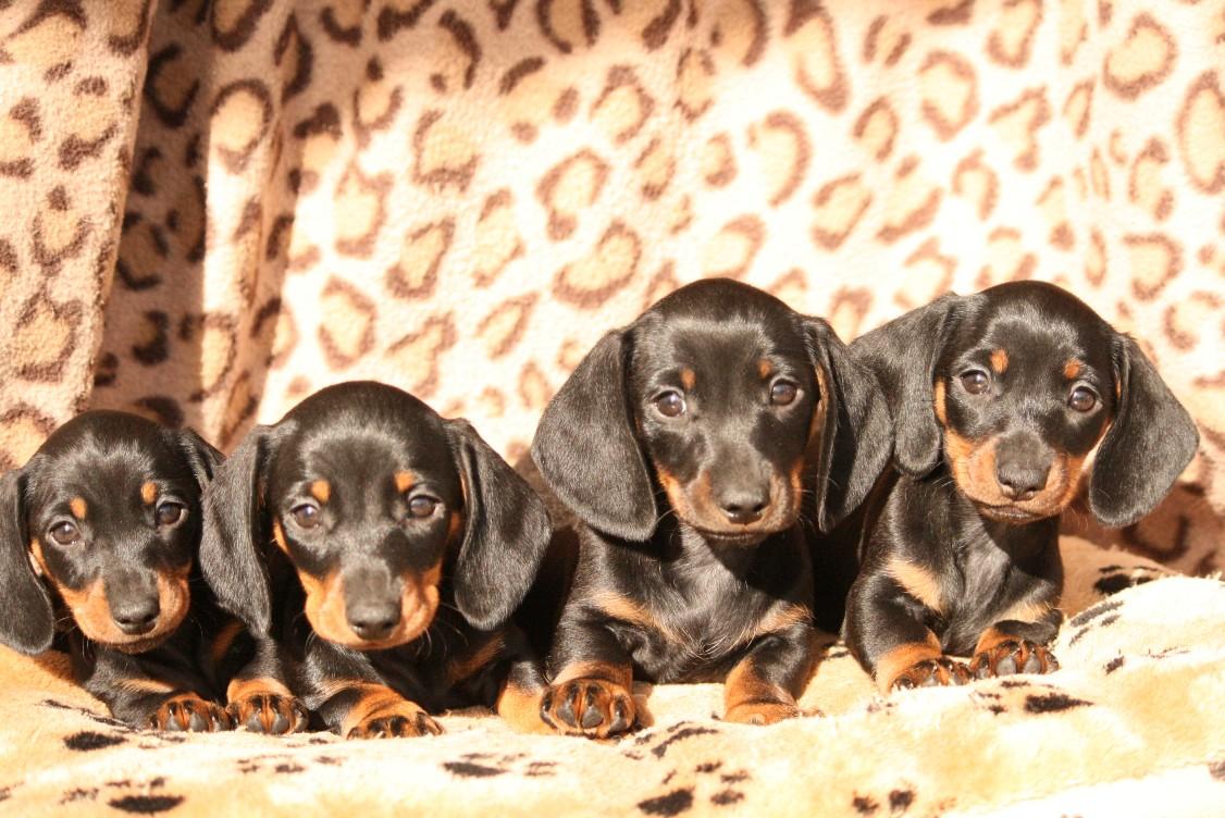 cuccioli-margot-e-leo-041