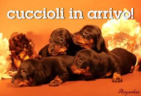 cuccioli in arrivo