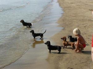 bassi spiaggia