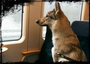 cane-in-viaggio-in-treno