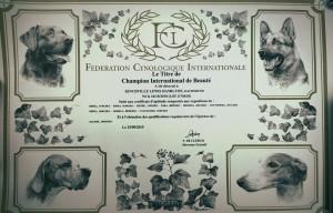 campionato internazionale Tosha